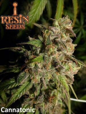 Resin Seeds Cannatonic