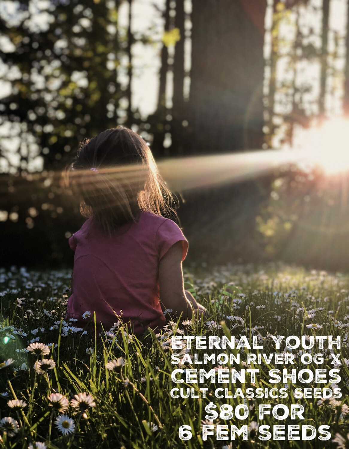 Cult Classics Seeds Eternal Youth