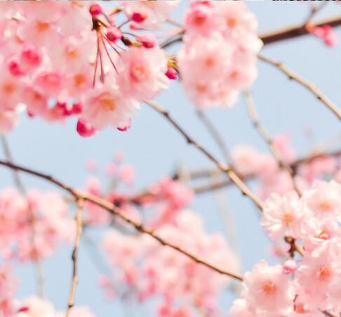 Spring - Dr. Gary DeWood