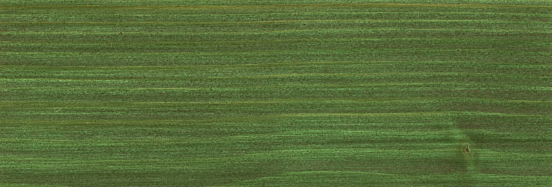 OSMO Holzschutz Öl-Lasur 729 Tannengrün, 2,5 L