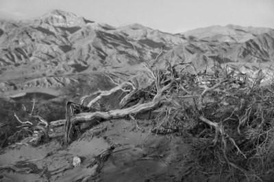 Dead Tree, Death Valley - California
