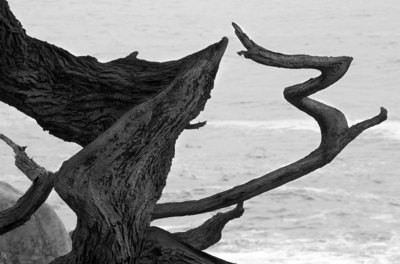 Cyprus Grove, Pebble Beach - California