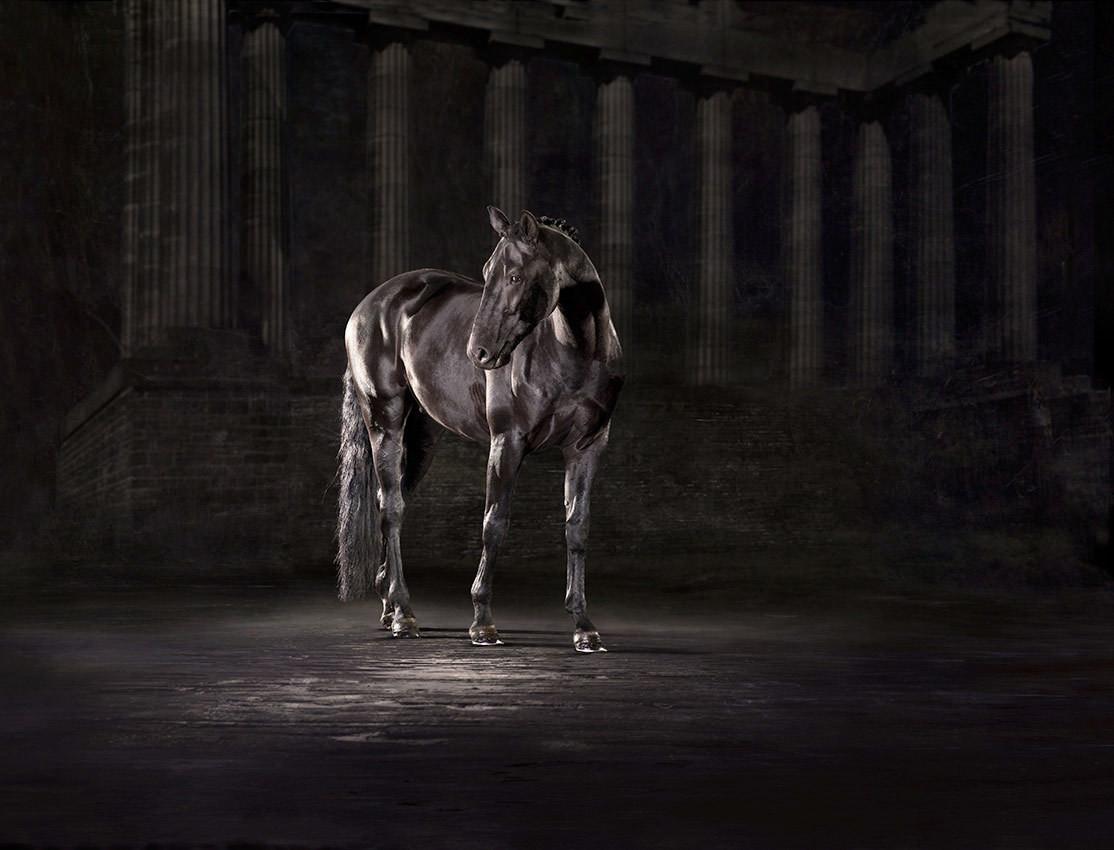 Luna - The Horse Series