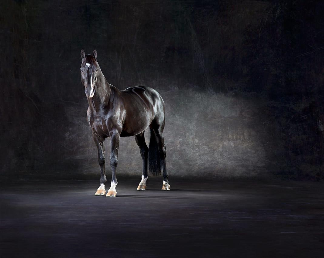Uthopia - The Horse Series