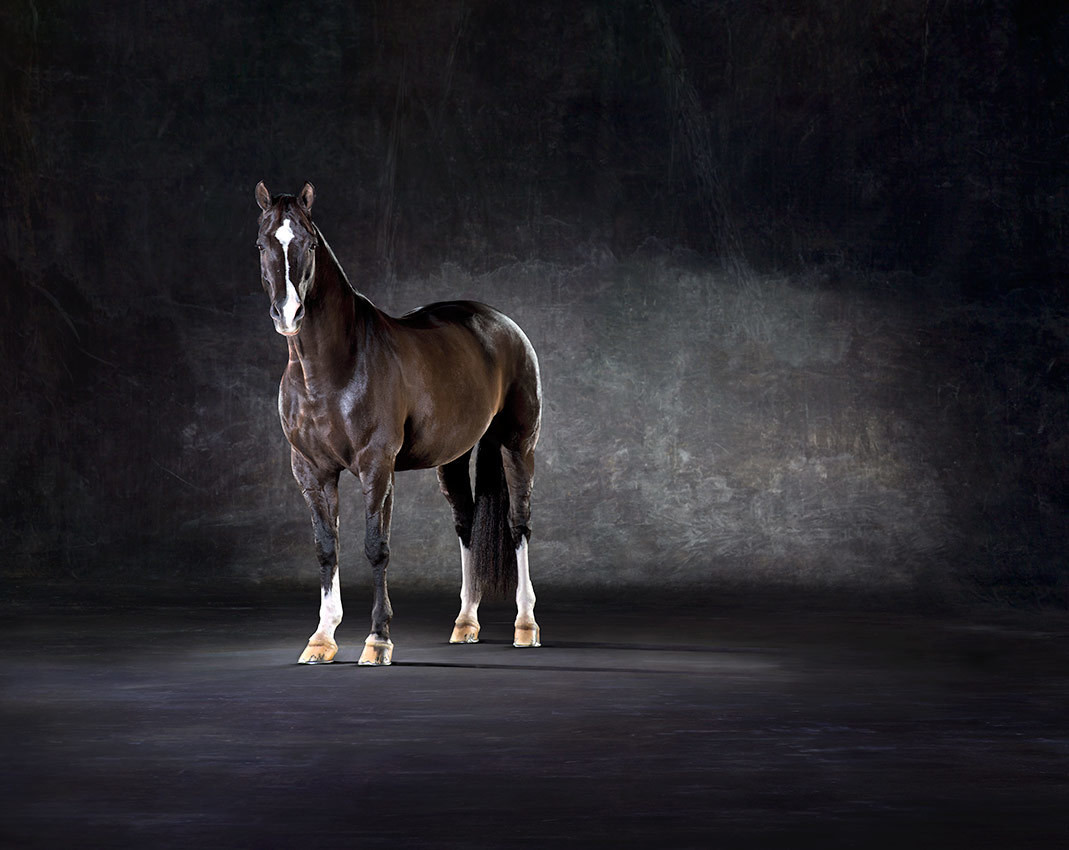 Valegro - Olympic Dressage Horse