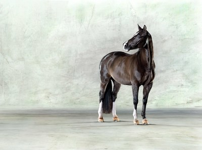 Valegro ll - Olympic Dressage Horse