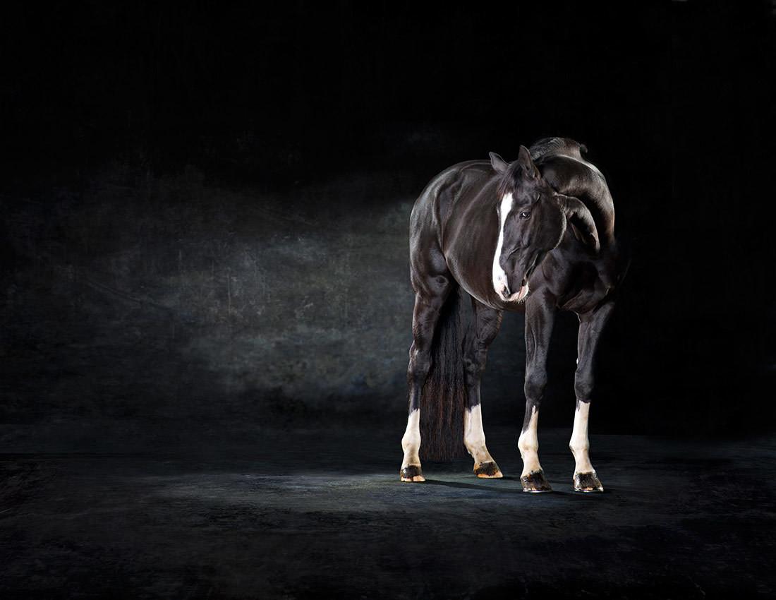 Katchina - The Horse Series