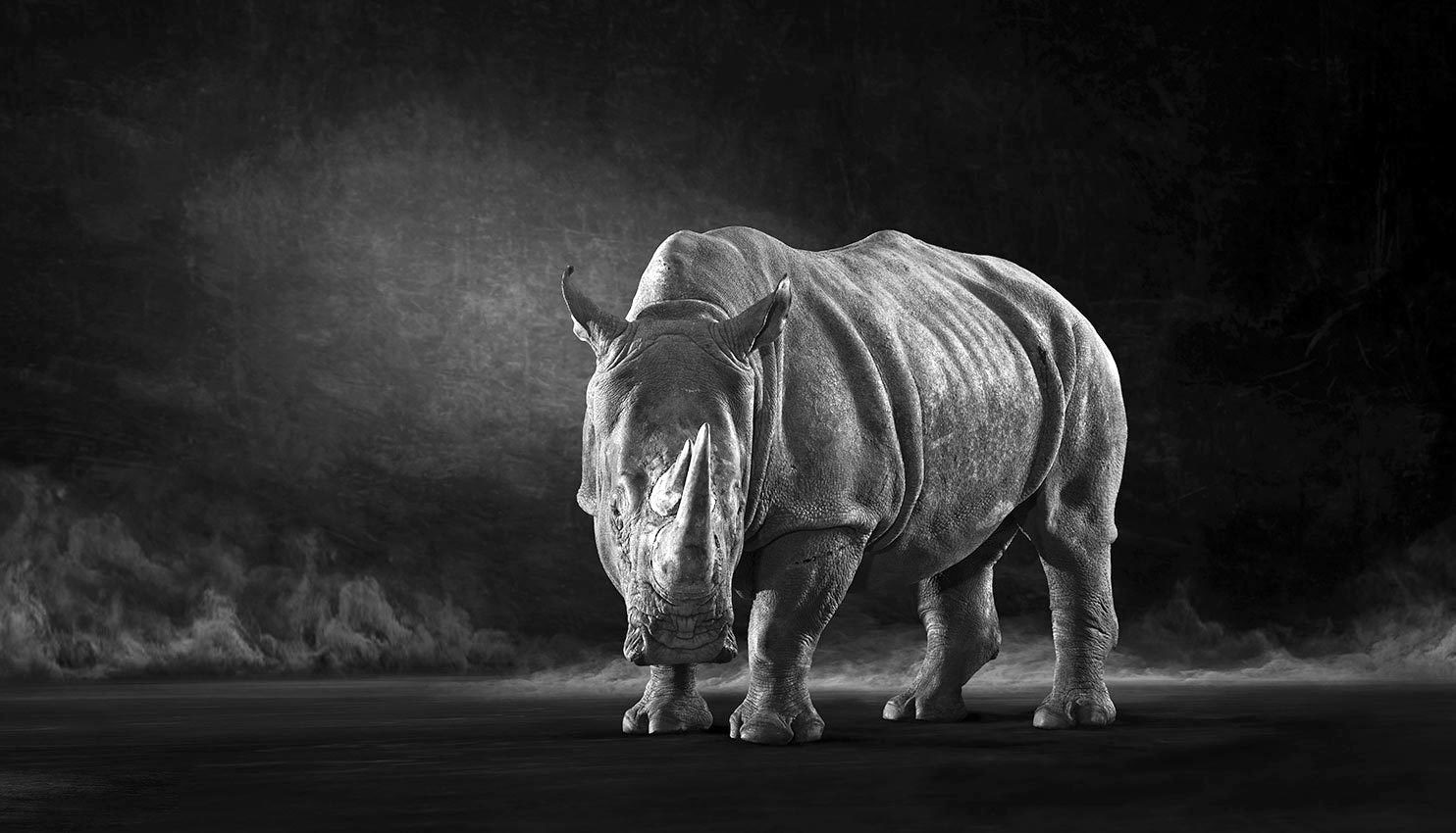 The White Rhino - The Endangered Series