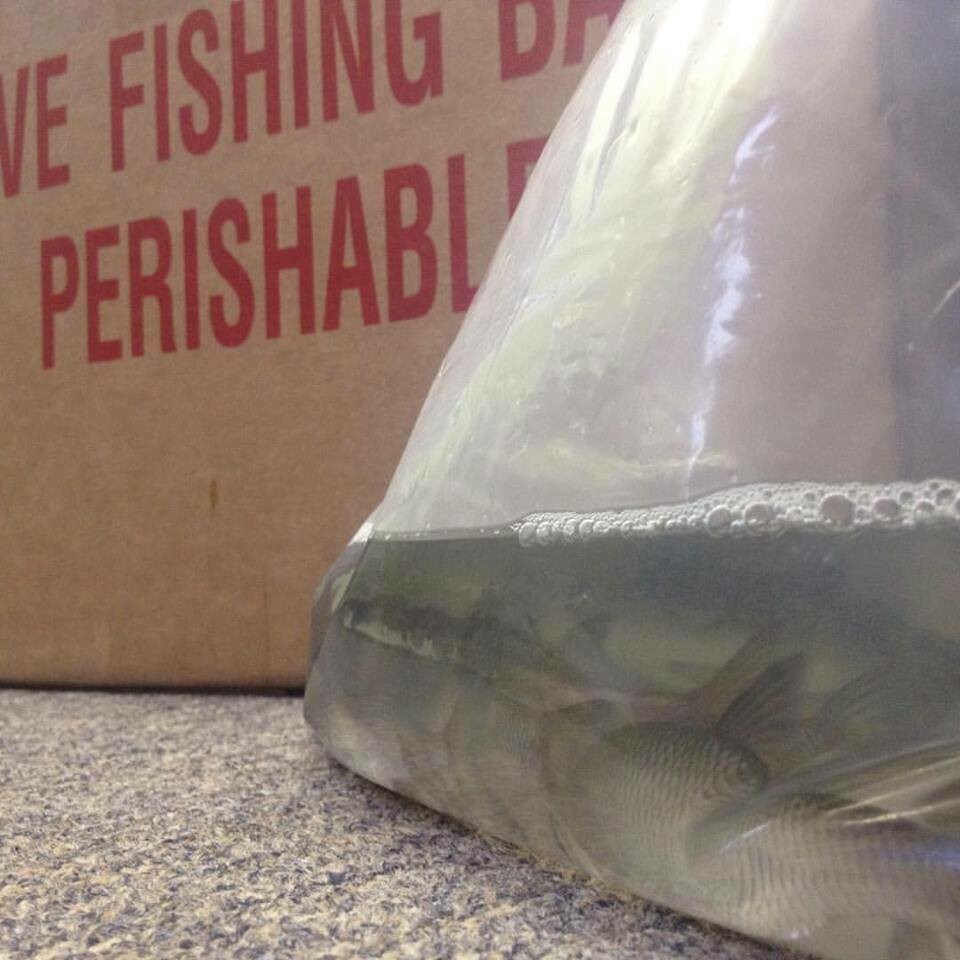 Live Bait Special Order  IN-STORE PICKUP ONLY