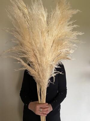 Dried Pampas Grass Stem