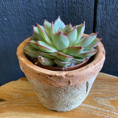 Mini Succulent In Terracotta Pot