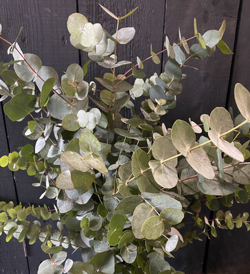 Eucalyptus Bunch