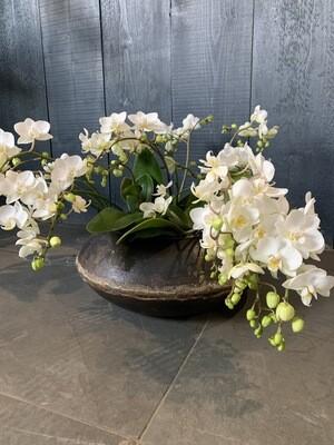 Wild Orchids In Dhurri Urn