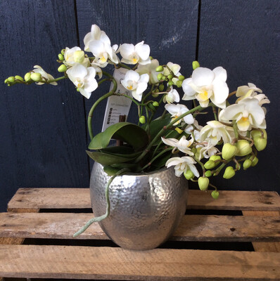 Wild Orchid - White