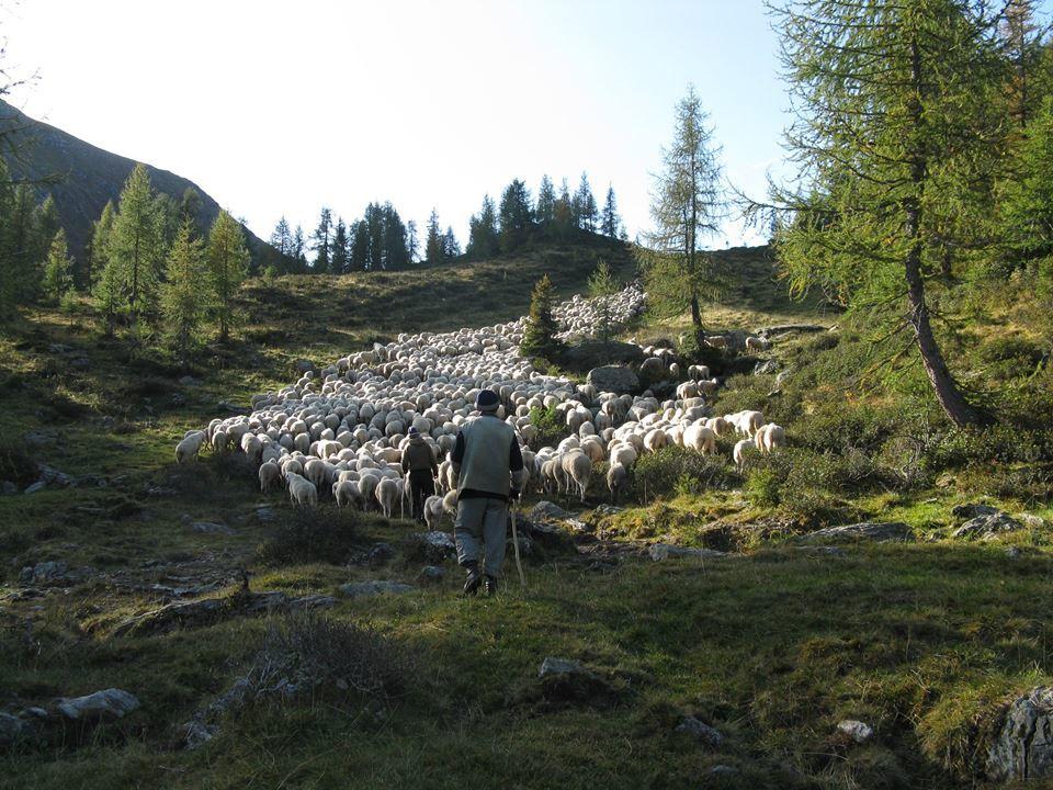 Agnello delle Dolomiti (9 kg)