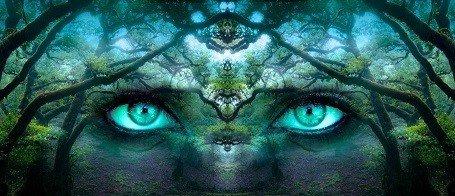 Forest Illustration - Matt Laminated Photo Frame