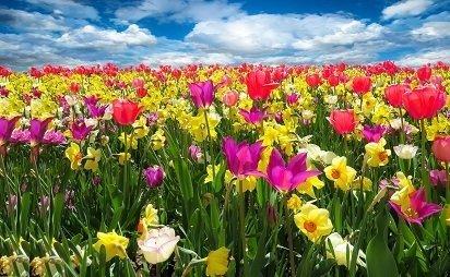 Spring Awakening Picture Print with Frame