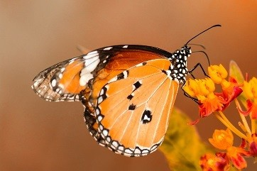 Butterfly - Matt Laminated Photo Frame