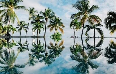 Coconut Trees - Matt Laminated Photo Frame