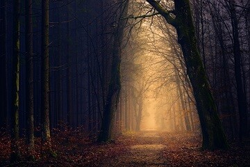 Forest in the Autumn - Matt Laminated Photo Frame