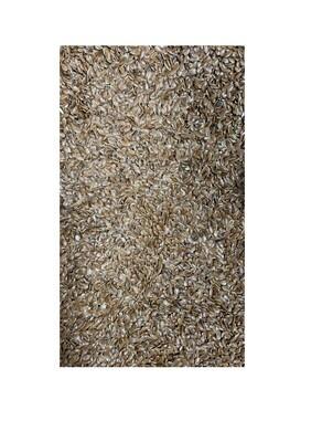 ሰሊጥ Sesame Seeds