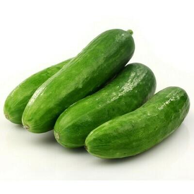 ኩከምበር Cucumber (Ethiopia Only)