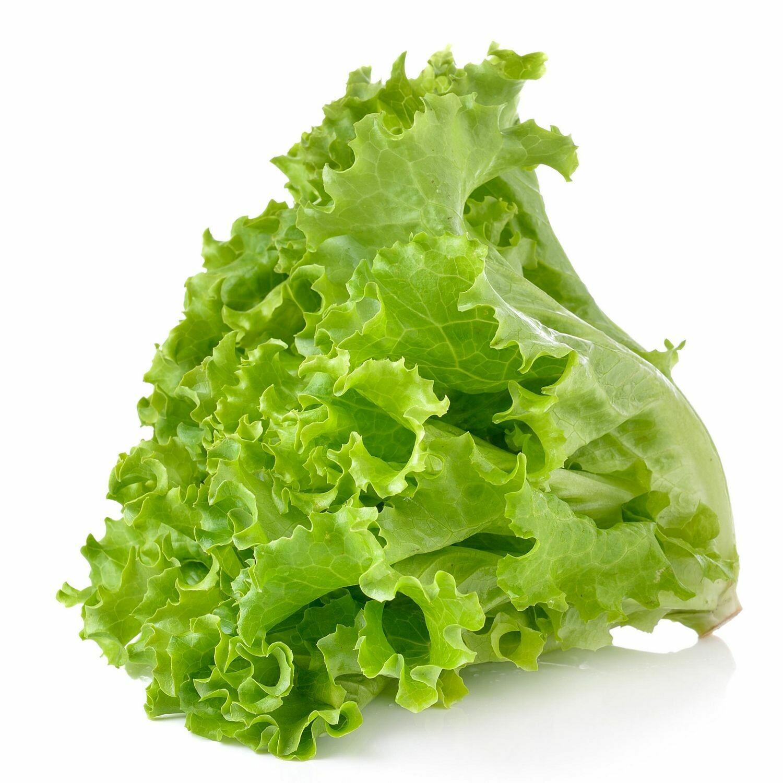 ሰላጣ Lettuce (Ethiopia Only)