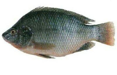 አሳ Fish (Ethiopia Only)