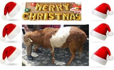 የሶደሬ የገና በአል ጥቅል Sodere Christmas Holiday Package 4 (Ethiopia Only)