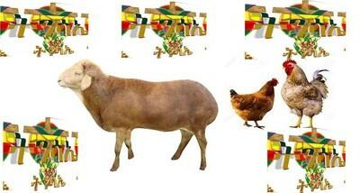 የሶደሬ የፋሲካ የበአል ጥቅል 6 Sodere Easter Holiday Package 6 (Ethiopia Only)