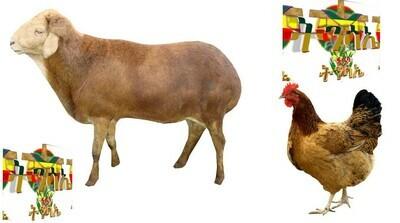 የሶደሬ የፋሲካ የበአል ጥቅል 7 Sodere Easter Holiday Package 7 (Ethiopia Only)