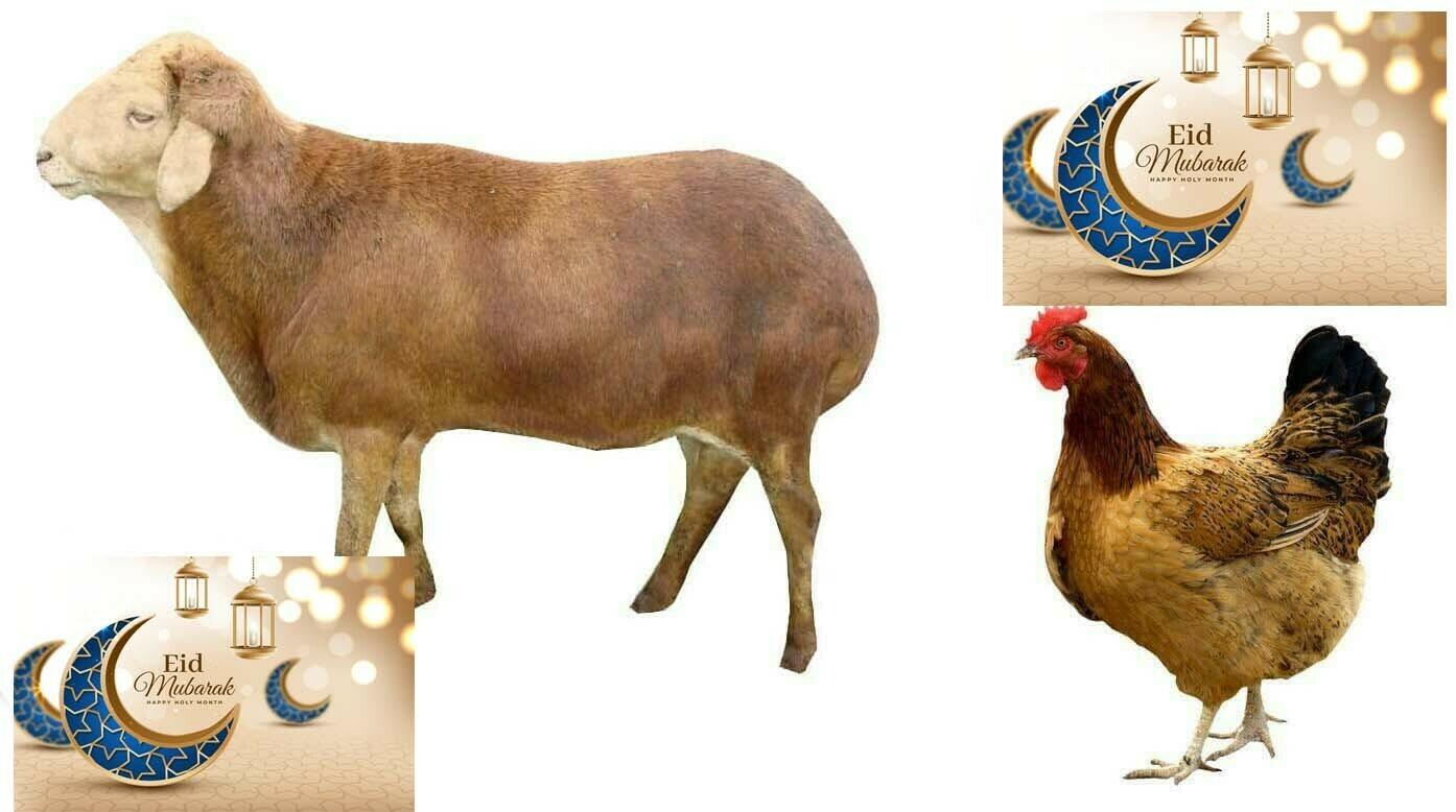 የኢድ አልፈጥር የበአል ጥቅል 4 Eid al-Fitr Holiday Package 4 (Ethiopia Only)