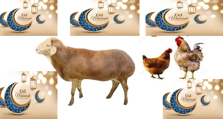 የኢድ አልፈጥር የበአል ጥቅል 5 Eid al-Fitr Holiday Package 5 (Ethiopia Only)