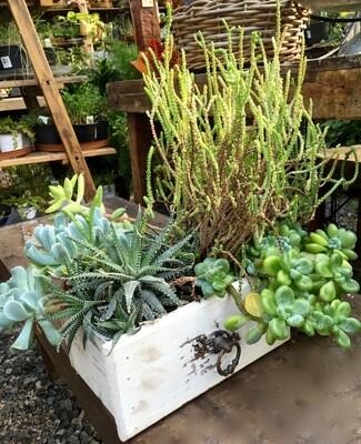 Succulent Planter 'White Dresser Drawer'