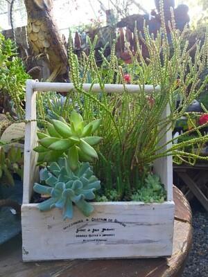Succulent Planter 'White Box'