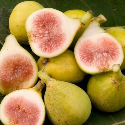 Fig Tree 'Peter's Honey'