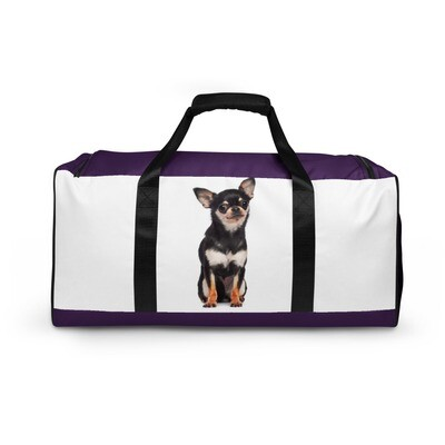 Kassi - Chihuahua