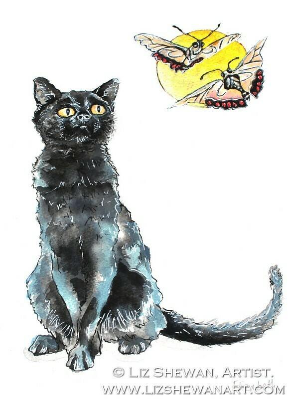 Black Cat Messenger