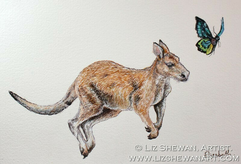 The Kangeroo and the Australian Butterfly