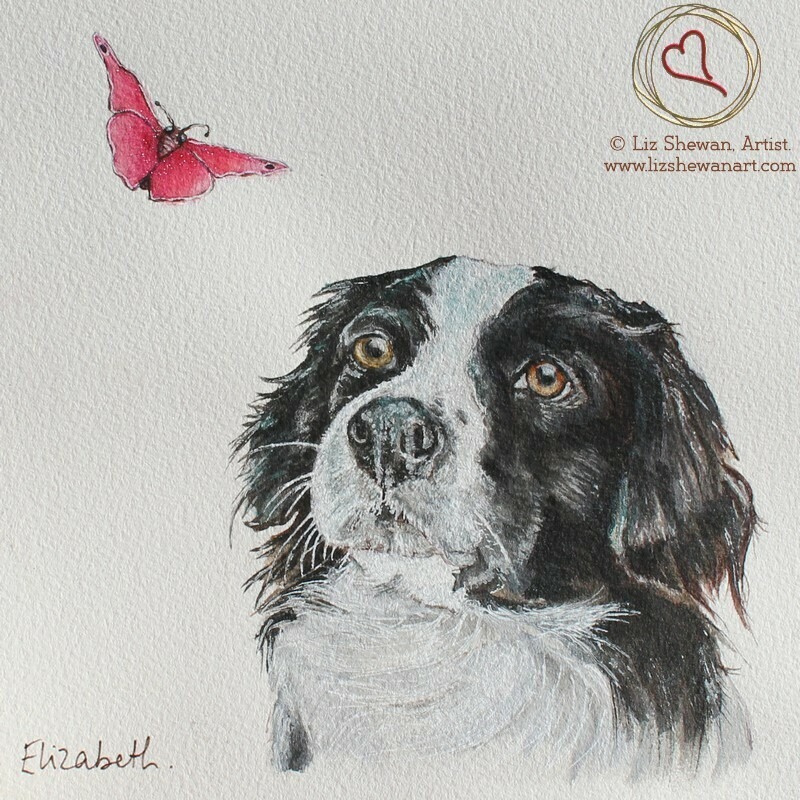 Collie and the Butterfly