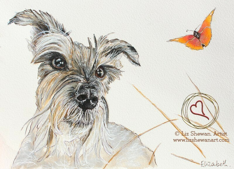 Schnauzer and the Butterfly