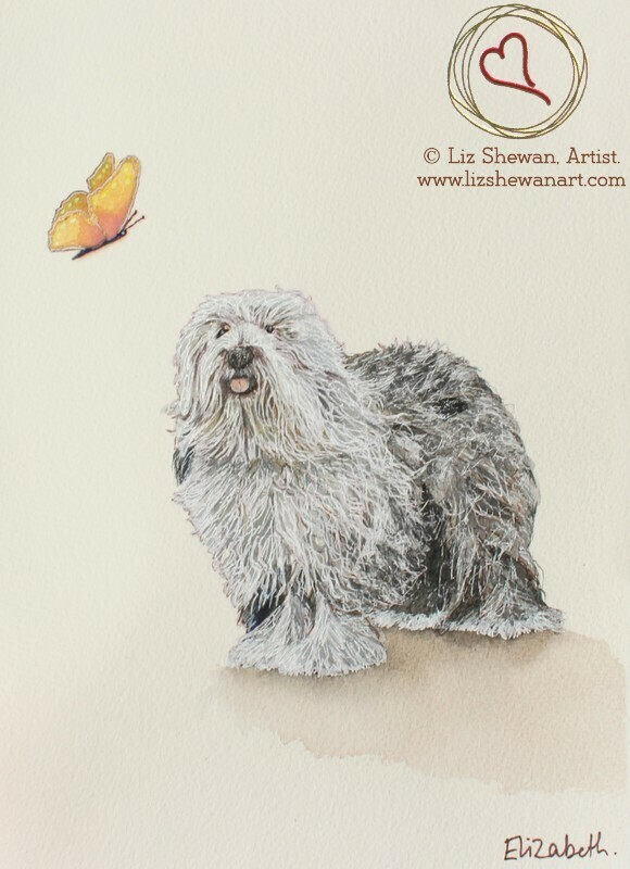 Butterfly and the Old English SheepDog
