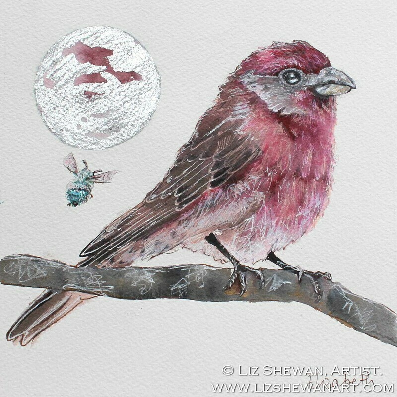 The House Finch | Heaven's Song