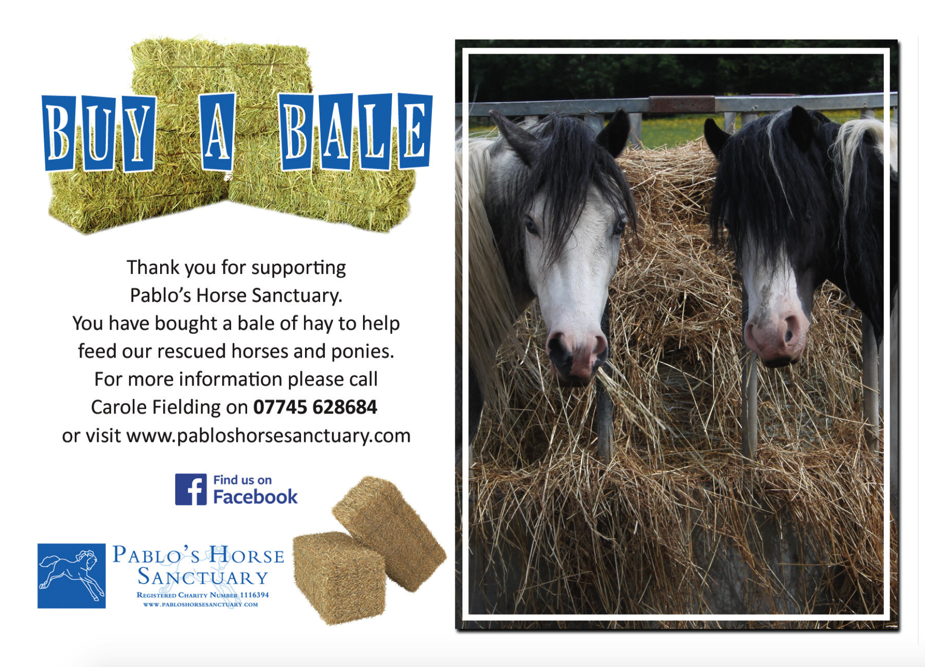 Buy a Bale of Hay for Pablo's