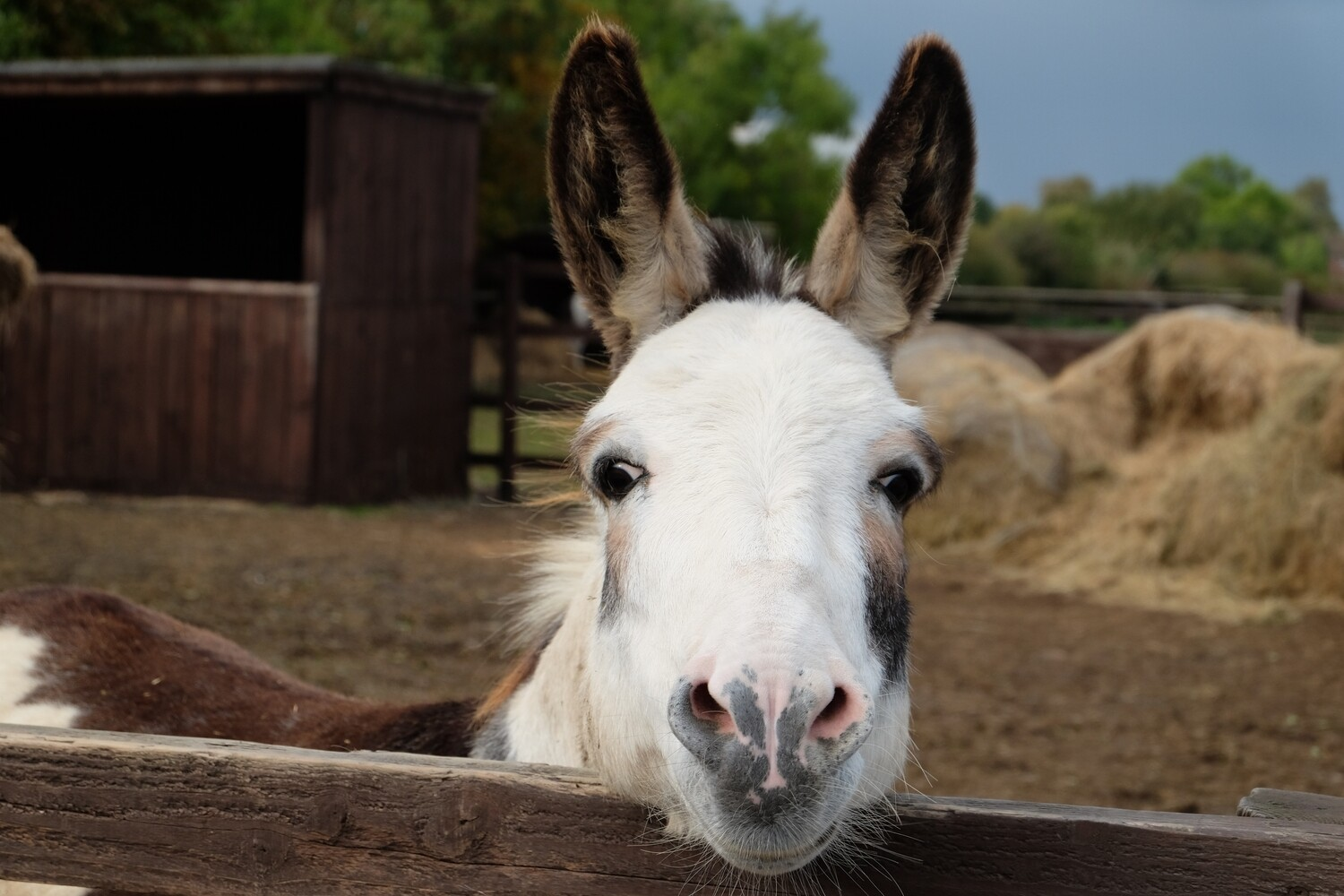 Sponsor a Horse or Pony