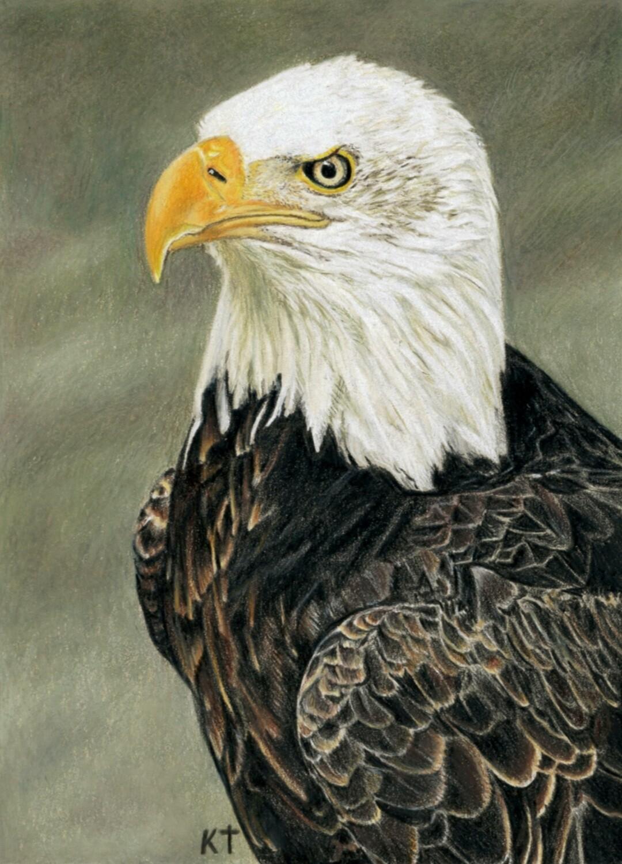 """Bald Eagle"" giclee print"