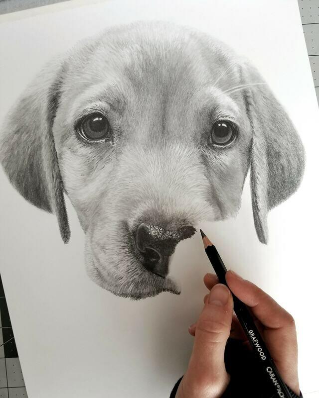 Custom 11x14 inch graphite portrait (head and shoulders) $190