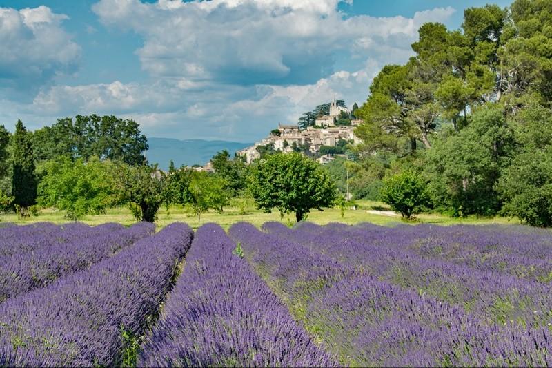 Bonnieux Lavender