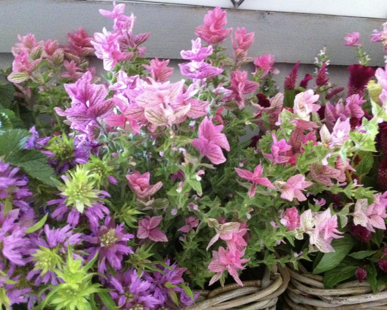 Livraison de fleurs / Fleurs coupées sélectionnés de la semaine (M)