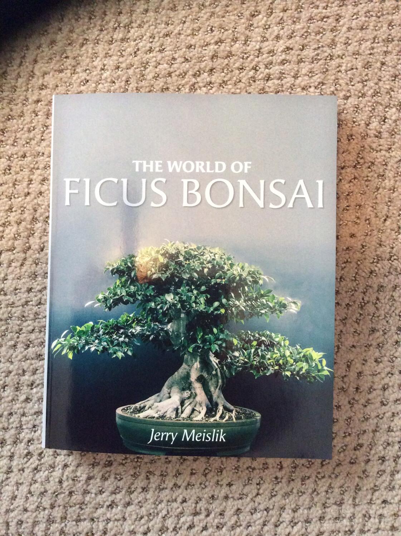 The World Of Ficus Bonsai
